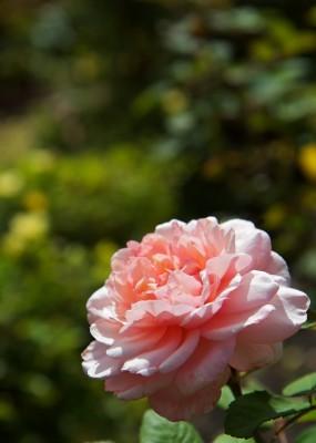 Sådan indretter du en romantisk have