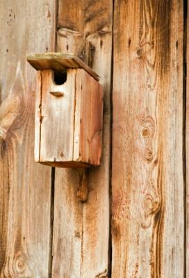 Værd at vide om fuglekasser